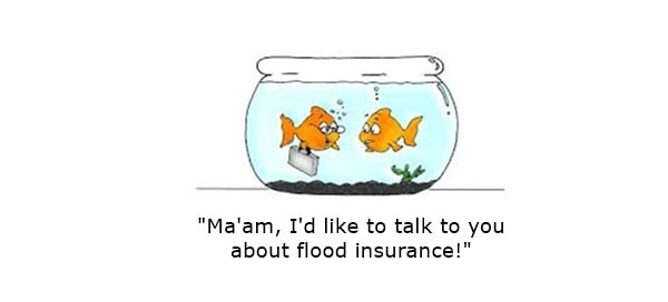 goldfish saying